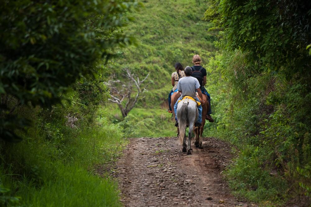 на лошадях в Карпатах