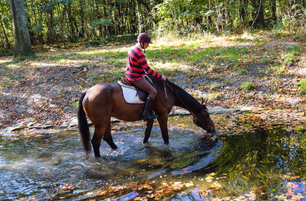 прогулки на лошадях в Буковеле